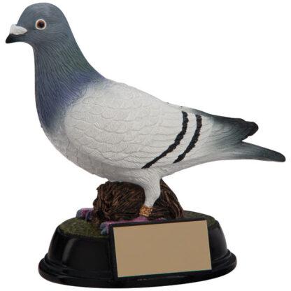 pigeon trophy